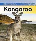 Life Cycle of a Kangaroo