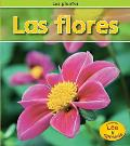 Las Flores = Flowers (Plantas)