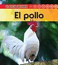 El Pollo = Chicken (Ciclo de Vida...)