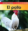 El Pollo (Chicken) (Ciclo de Vida)