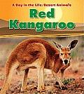 Red Kangaroo (Day in the Life: Desert Animals)