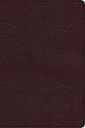 Biblia de Estudio Arco Iris-Rvr 1960