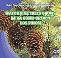 Watch Pine Trees Grow/Mira Como Crecen Los Pinos!