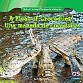A Float of Crocodiles/Una Manada de Cocodrilos