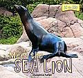 Meet the Sea Lion (At the Zoo)