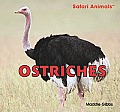 Ostriches (Safari Animals)