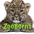 Zooborns Calendar: The Newest, Cutest Animals from the World's Zoos
