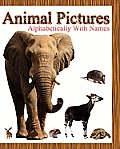 Animal Pictures Alphabetically with Names