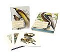 Extraordinary Birds Essays & Plates of Rare Book Selections from the American Museum of Natural History Library