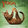 Yoga Cats 2014 18-Month Calendar