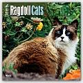 Ragdoll Cats Calendar