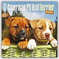 American Pit Bull Terrier Puppies 2016 Calendar