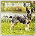 Australian Cattle Dogs 2016 Calendar