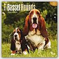 Basset Hounds 2016 Calendar