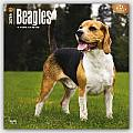 Beagles 2016 Calendar