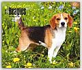 For the Love of Beagles 2016 Calendar