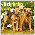 Border Terriers 2016 Calendar