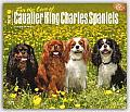 For the Love of Cavalier King Charles Spaniels 2016 Calendar