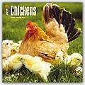 Chickens 2016 Calendar