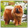 Chow Chows 2016 Calendar