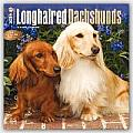 Longhaired Dachshunds 2016 Calendar