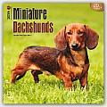 Miniature Dachshunds 2016 Calendar