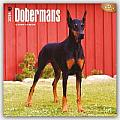 Dobermans 2016 Calendar