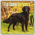 Flat-Coated Retrievers 2016 Calendar