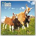 Goats 2016 Calendar