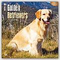 Golden Retrievers 2016 Calendar