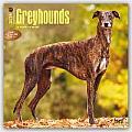 Greyhounds 2016 Calendar