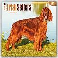 Irish Setters 2016 Calendar