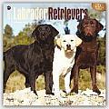 Labrador Retrievers 2016 Calendar