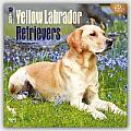Yellow Lab Retrievers 2016 Calendar