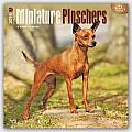 Miniature Pinschers 2016 Calendar