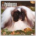 Pekingese 2016 Calendar