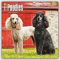 Poodles 2016 Calendar