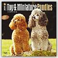 Toy & Miniature Poodles 2016 Calendar
