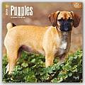 Puggles 2016 Calendar