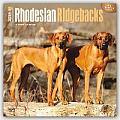 Rhodesian Ridgebacks 2016 Calendar