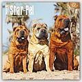 Shar-Pei 2016 Calendar