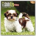 Shih Tzu Puppies 2016 Calendar