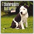 Staffordshire Bull Terrier Puppies 2016 Calendar