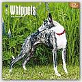 Whippets 2016 Calendar