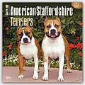 American Staffordshire Terriers 2016 Calendar