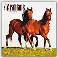 Arabians 2016 Calendar