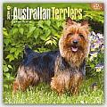 Australian Terriers 2016 Calendar