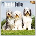 Bearded Collies 2016 Calendar