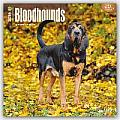 Bloodhounds 2016 Calendar