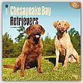 Chesapeake Bay Retrievers 2016 Calendar